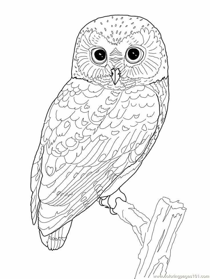 Распечатать картинку сова