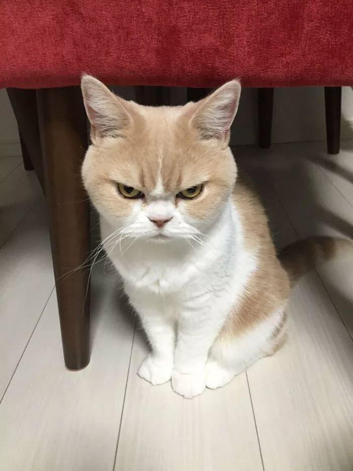 Такого угрюмого кота вы еще не видели!