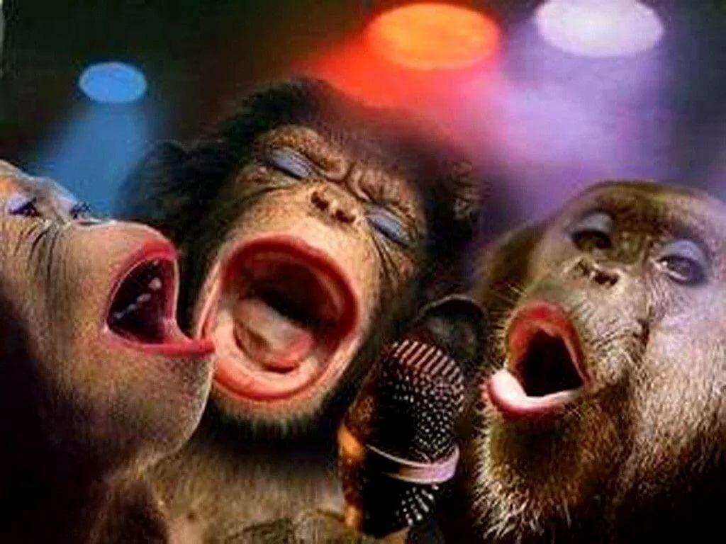 картинка обезьяны поют хэппи бездей намекает, что джентльмен