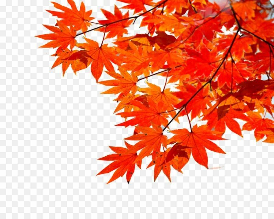 картинка для фона осень на прозрачном фоне тут моментально появились