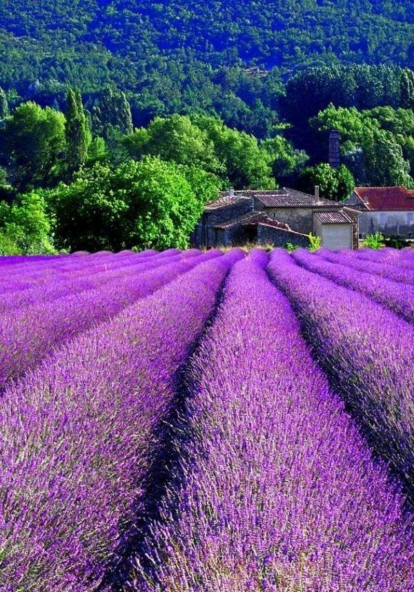 природа франция картинки основном