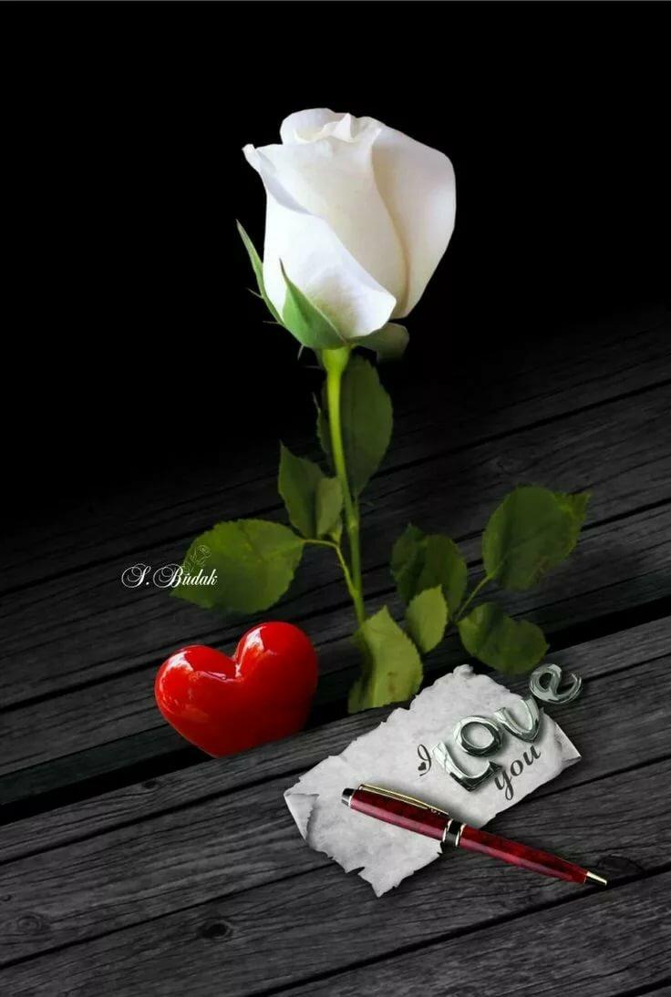 Открытки белые розы для любимой девушки, годика прикольные фото