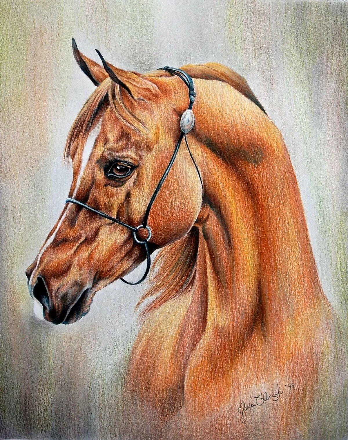 Рисунки животных лошадки