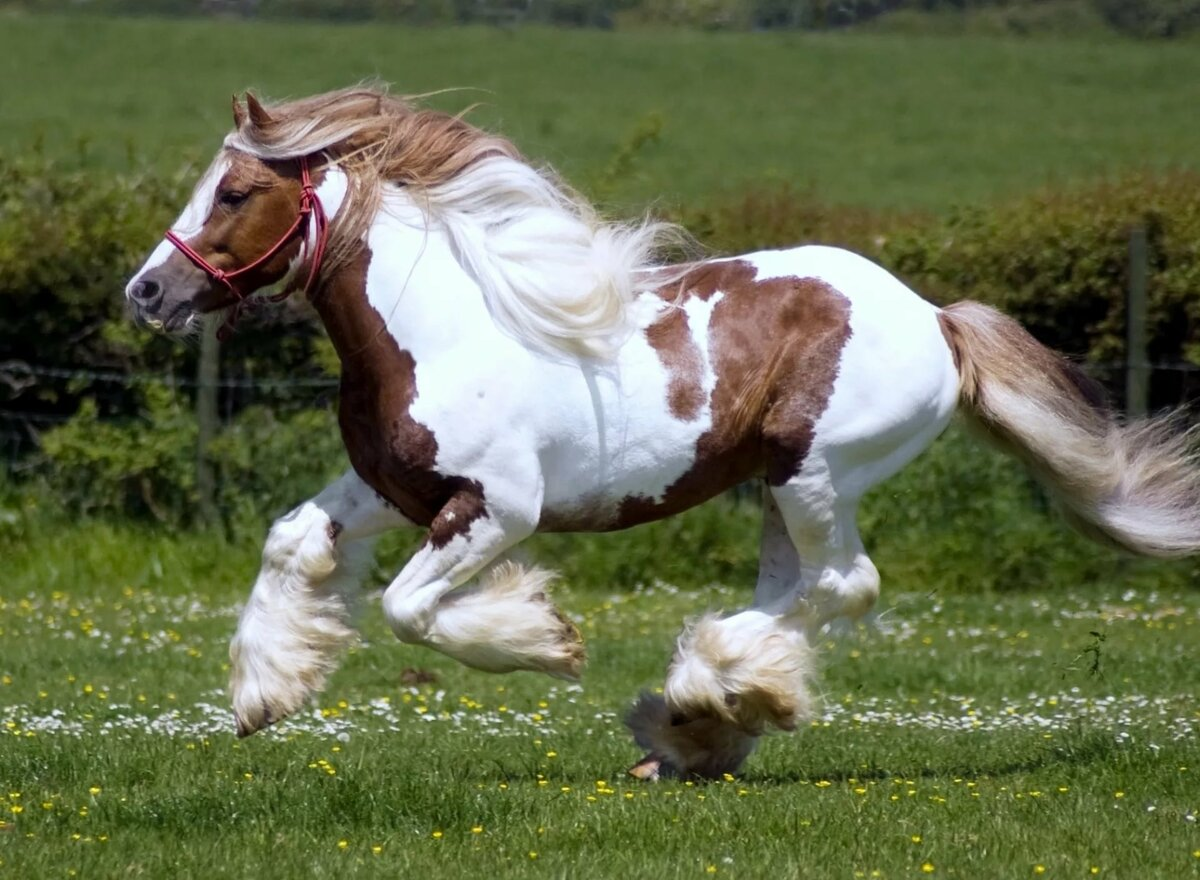 патология картинки с разными лошадьми будет через пару
