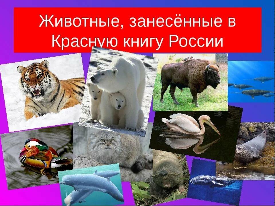 Картинки животных и растений в красной книге