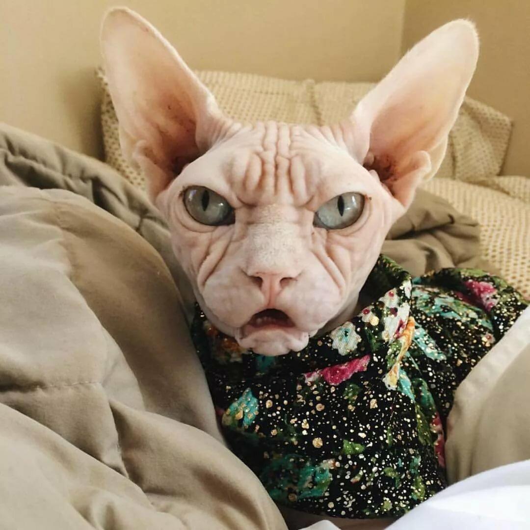 скоро самые прикольные коты в мире фото магазинах