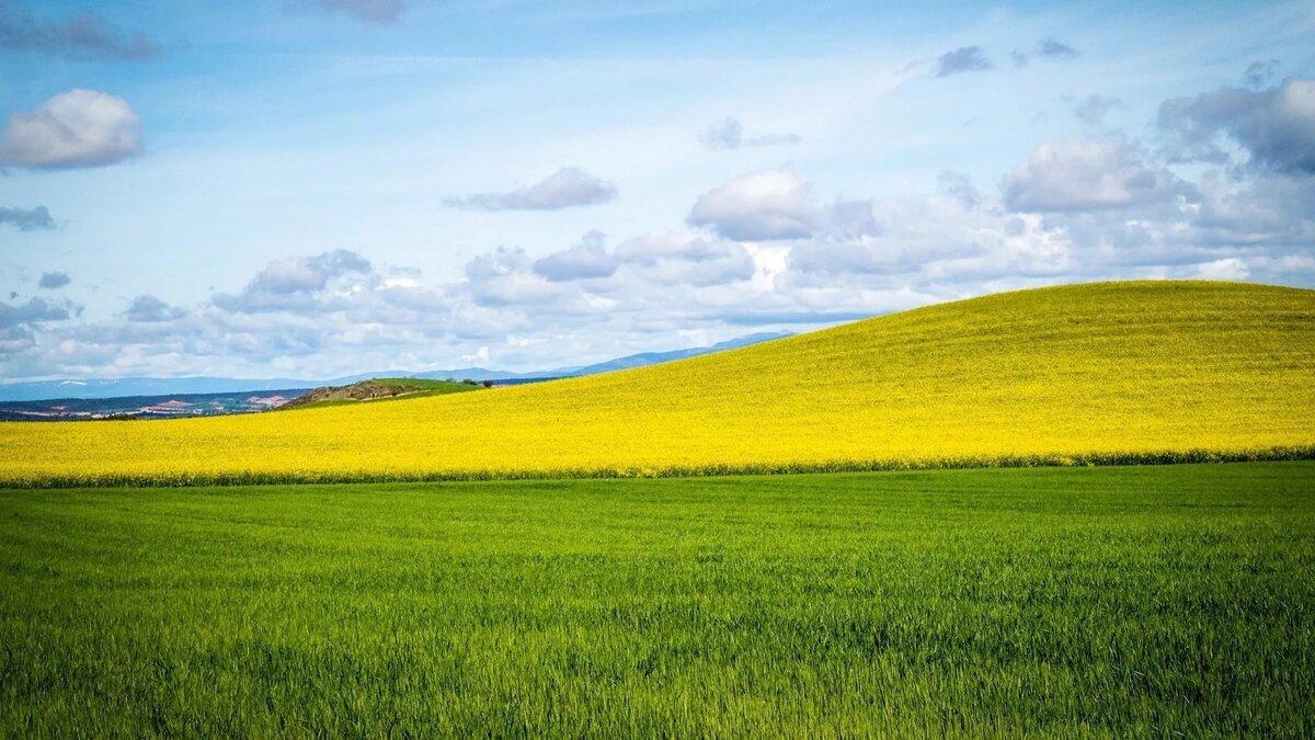 Луг трава поле картинки