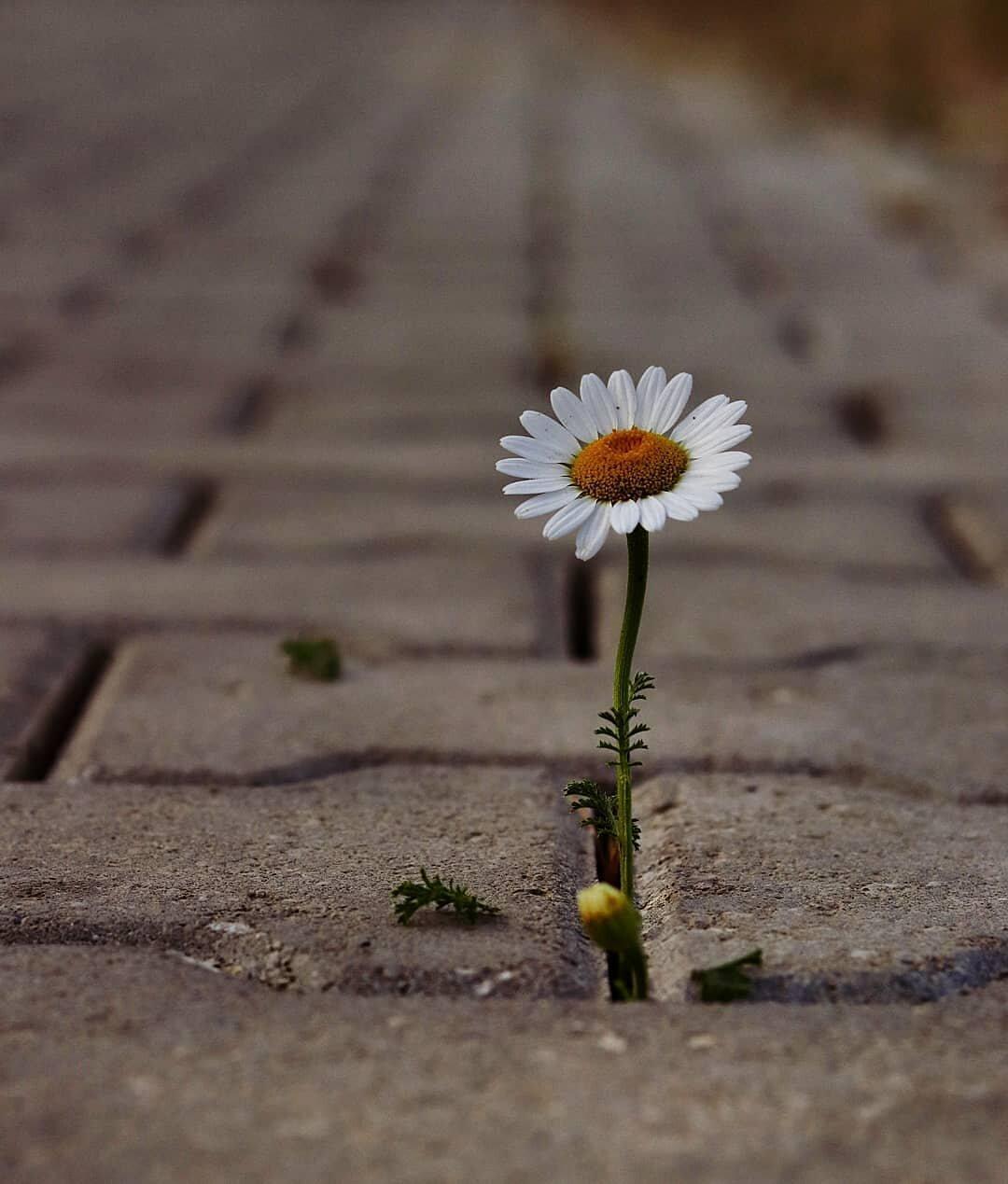 красивые картинки цветок из асфальта названии этой