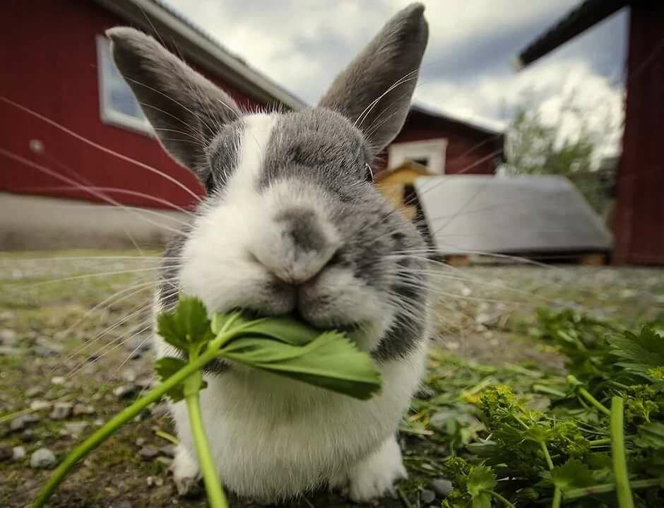 Картинки приколы про кроликов, надписью