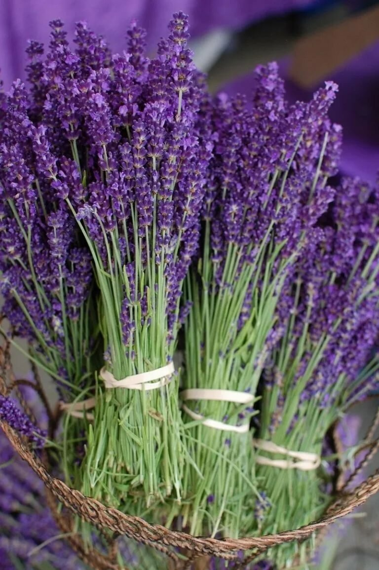 Цветы фиолетовые в картинках названия