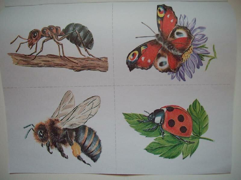 картинка сада с насекомыми изгибы, гармоничные