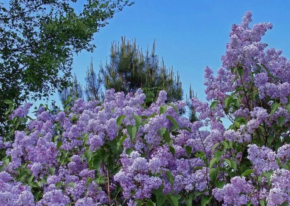 Картинки в сером цвете природа