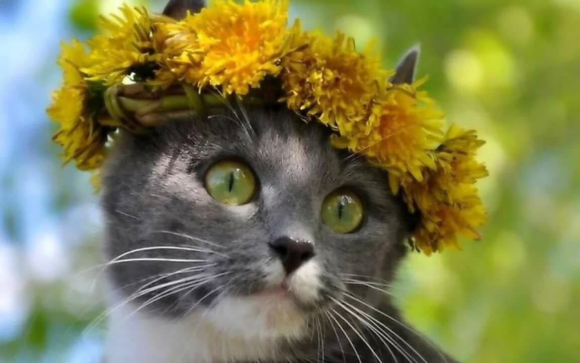 Самой красивой, прикольные картинки про весну и женщин