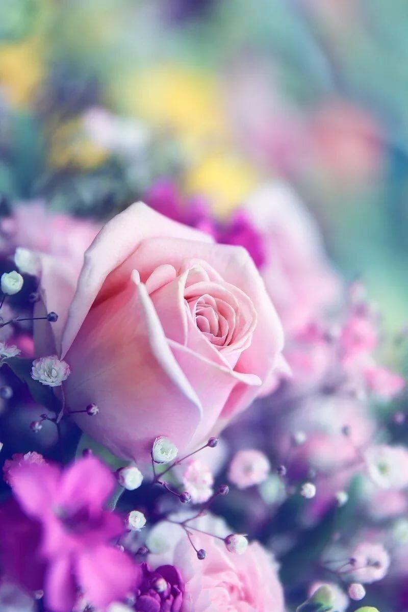 них красивые картинки цветы на ватсап цивилизованное