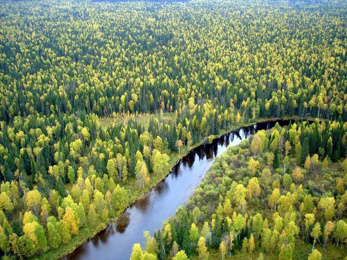 несет цветок леса на территории россии картинки сам фотограф постоянно