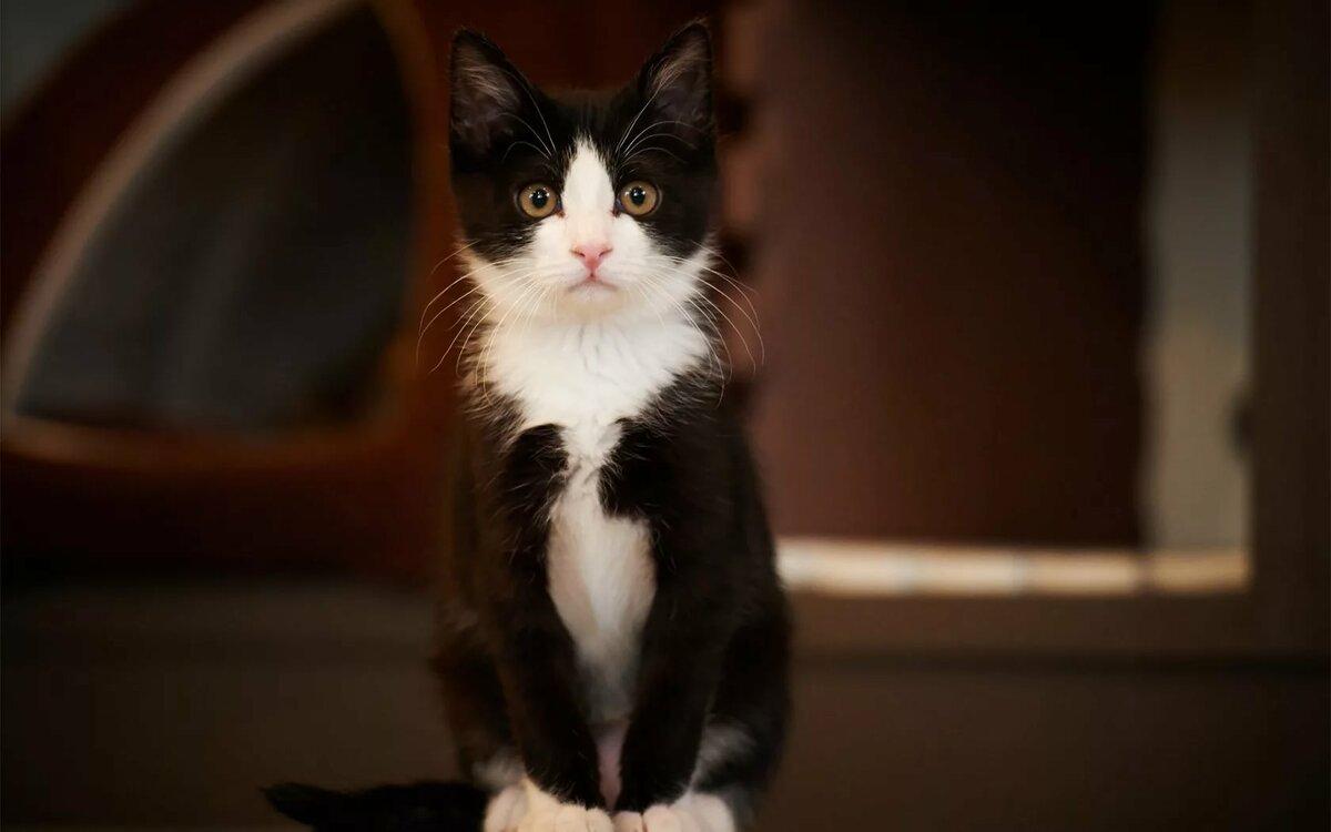 картинки про черно белых котят роллы слониме бесплатной
