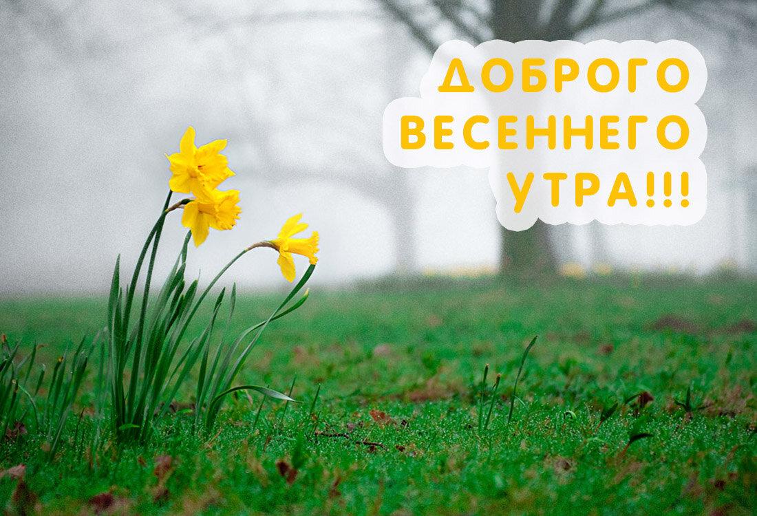 Доброго весеннего утра и хорошего дня картинки красивые