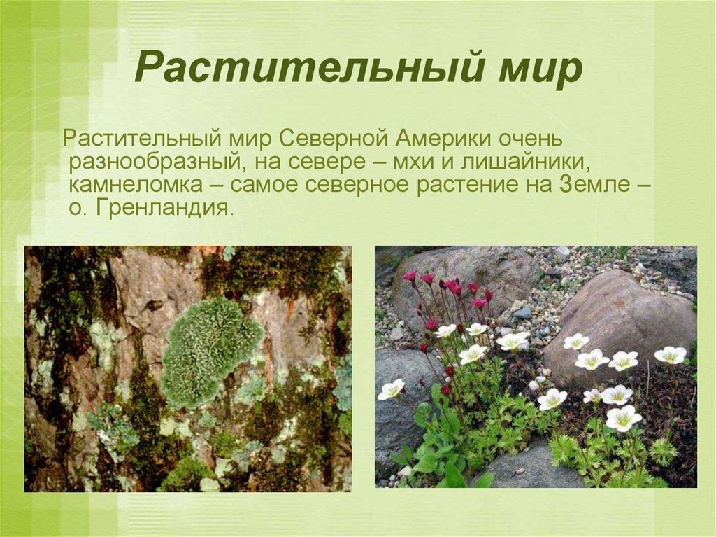 растения северной америки список с фото конкурентное