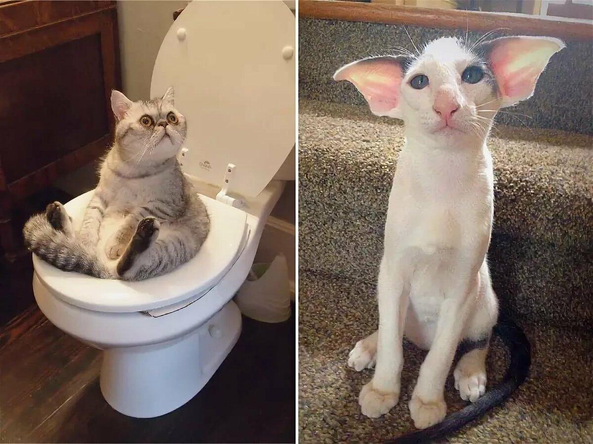 Картинки смешные кошки и котята и коты до слез, ранней весны