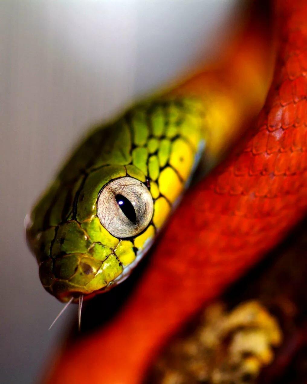 Змеиные глаза фото