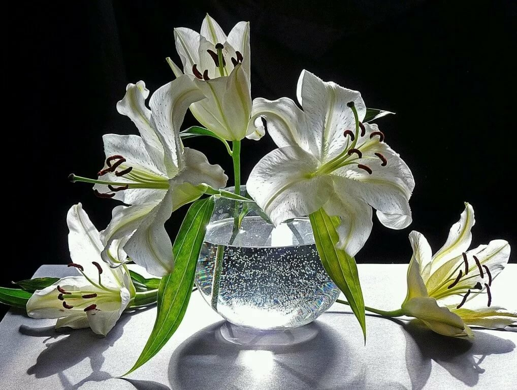 картинки с пожеланиями лилиями китая
