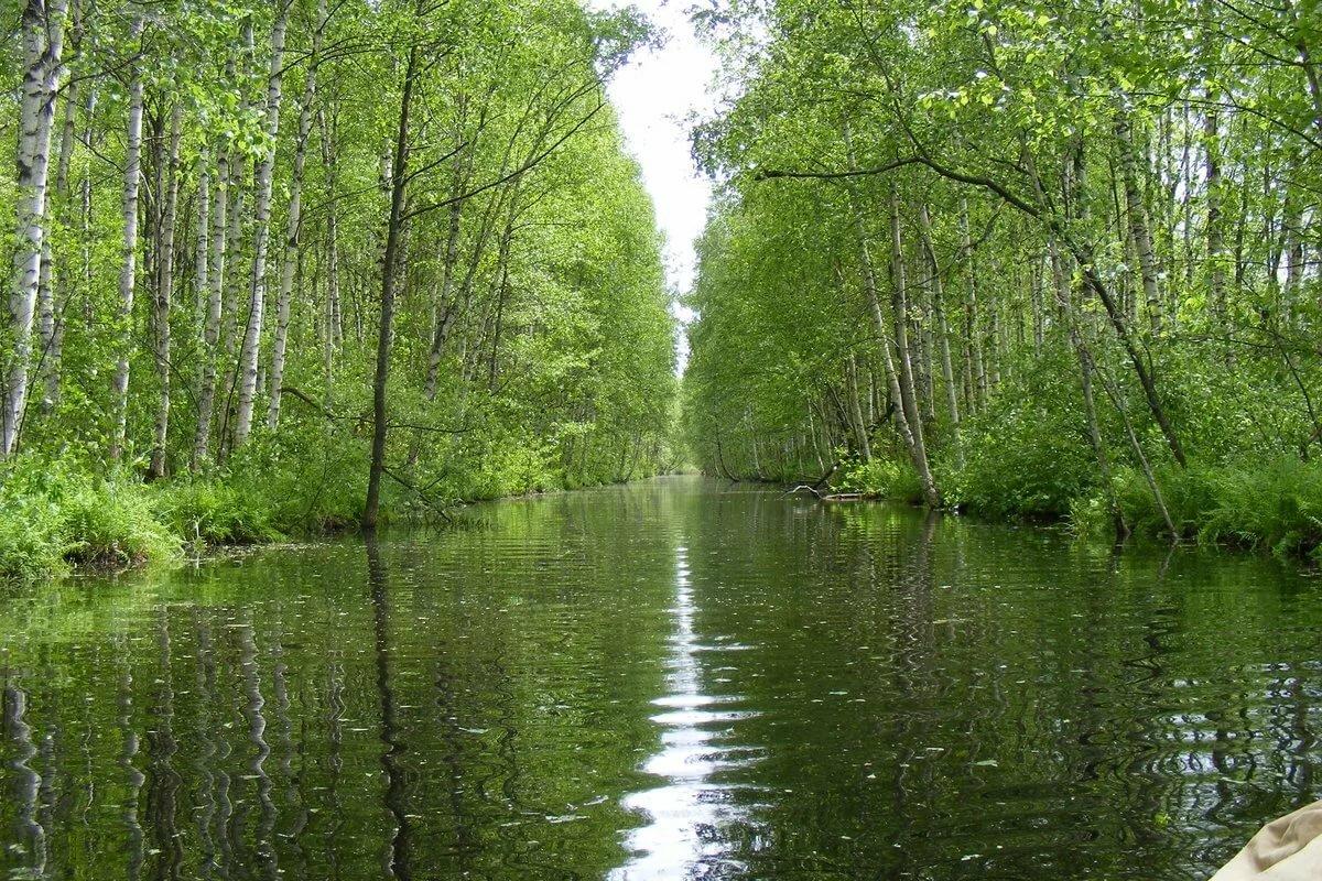 Озеро березы лес картинки