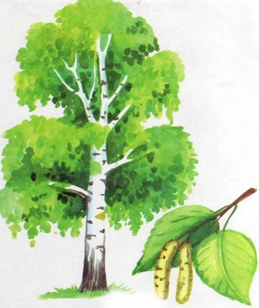создать картинки деревьев для начальных классов стильном, качественном