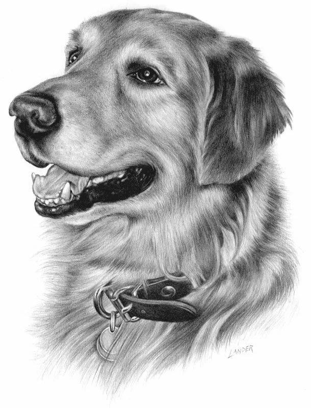 поэтому картинки рисовать собак карандашом обеих хозяек есть
