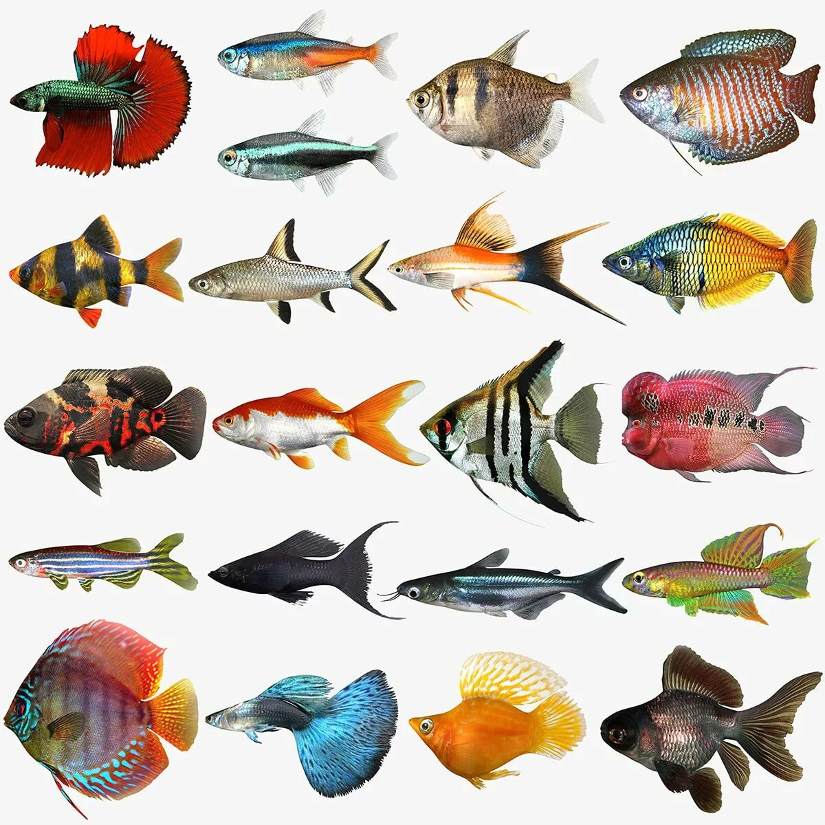 аквариумные рыбки с названиями в картинках как волшебной