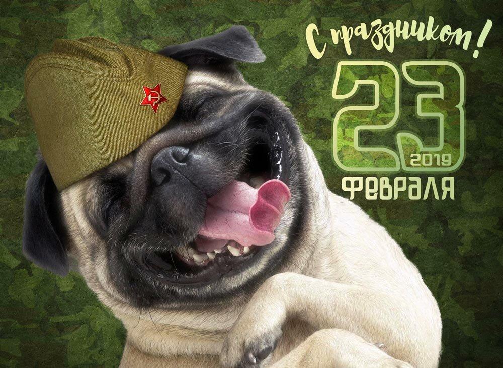 Картинки смешные день защитника отечества