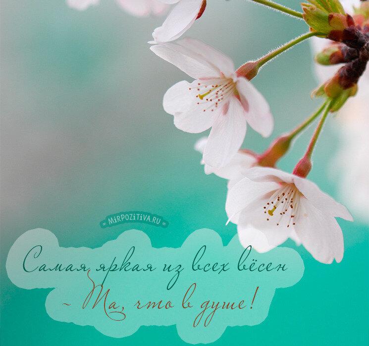 Цветы открытки с фразами, картинки цветов для