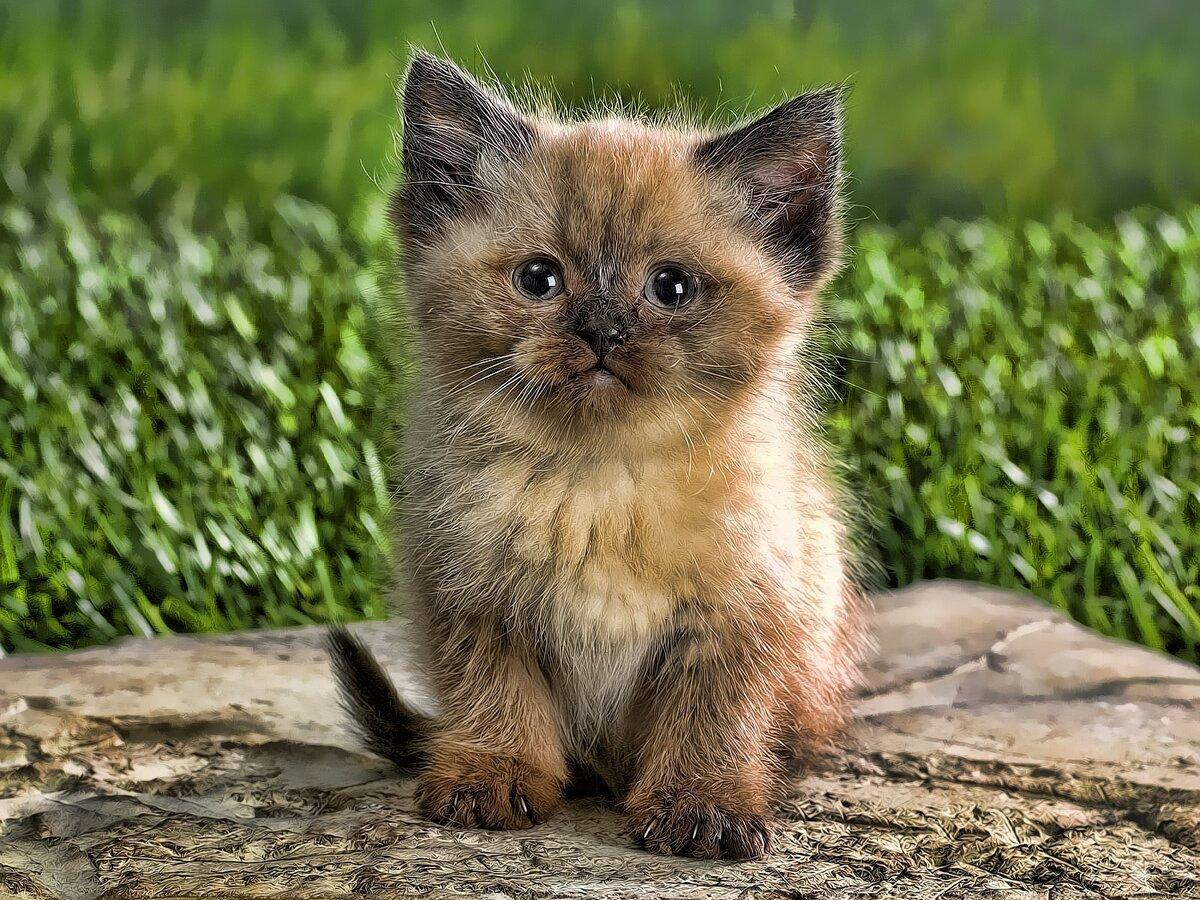 итоге мини фотки котят ну