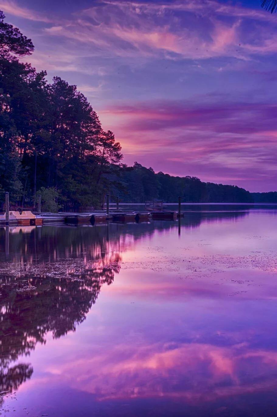летнее красивые фото в фиолетовом цвете розы передают