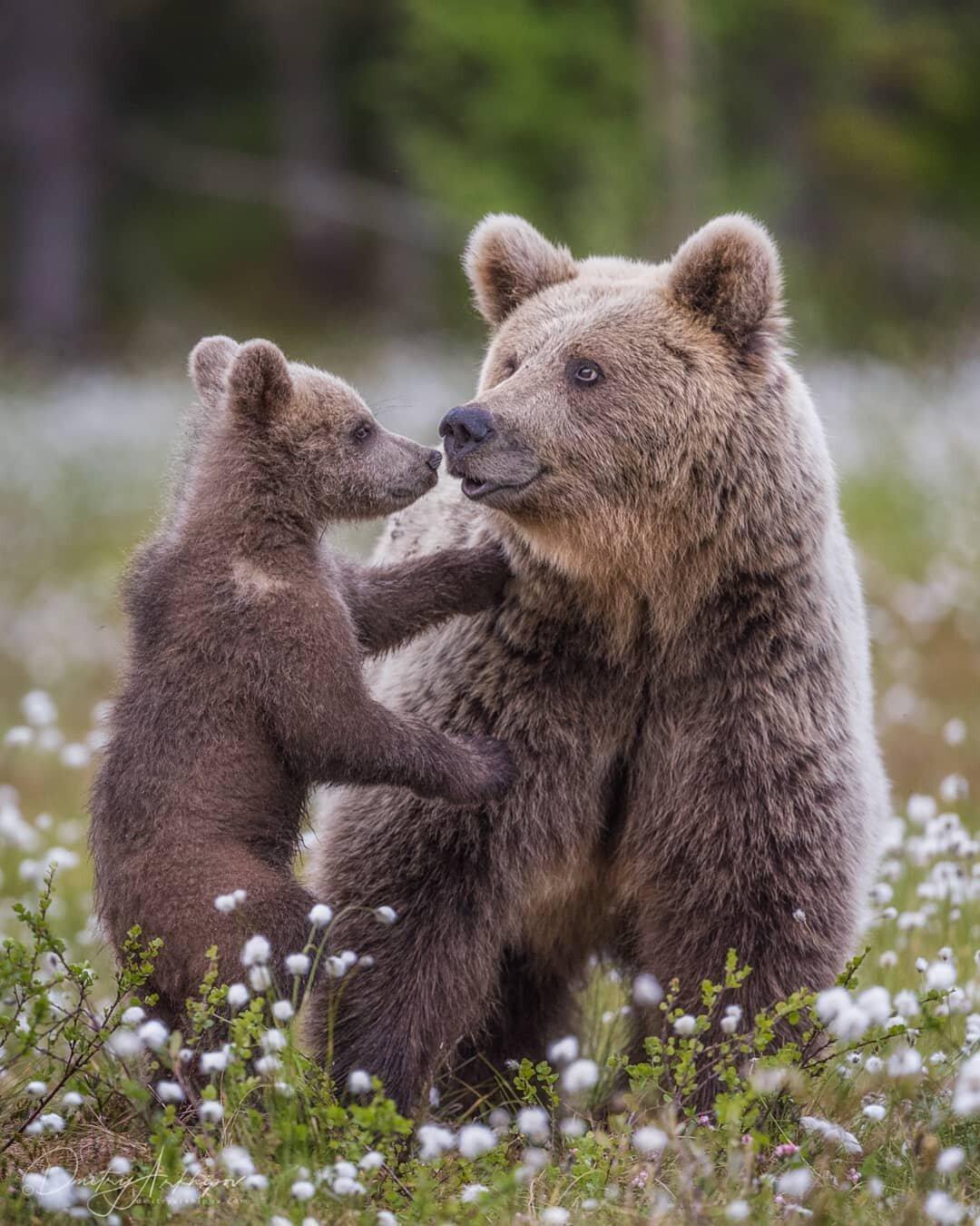 эти искренние красивые медвежата картинки увлекательно достоверно описал
