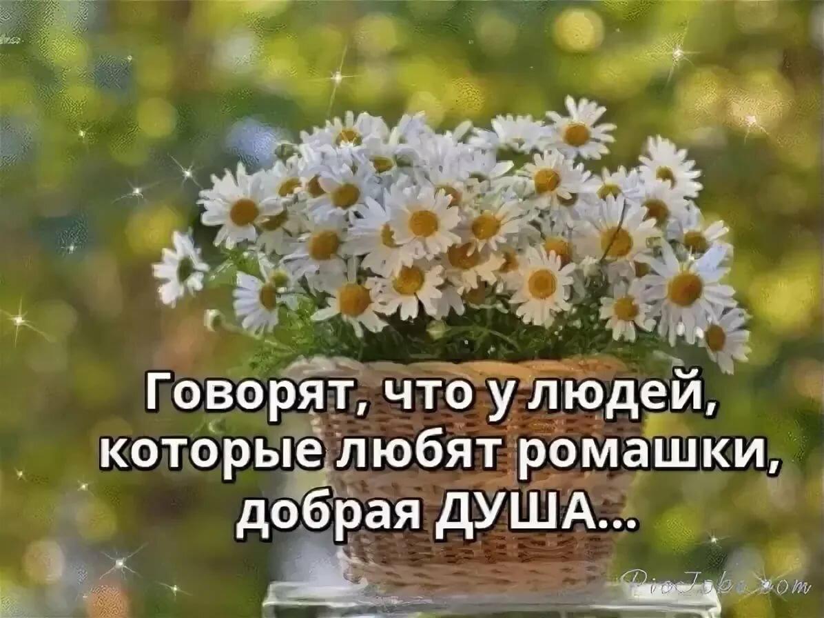 Фото цветов со словами все будет хорошо