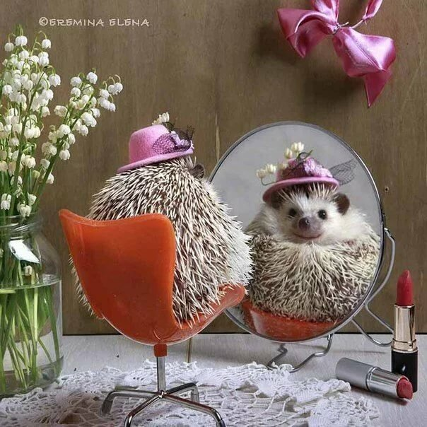 Art. Elena Eremina ⥠hedgehog
