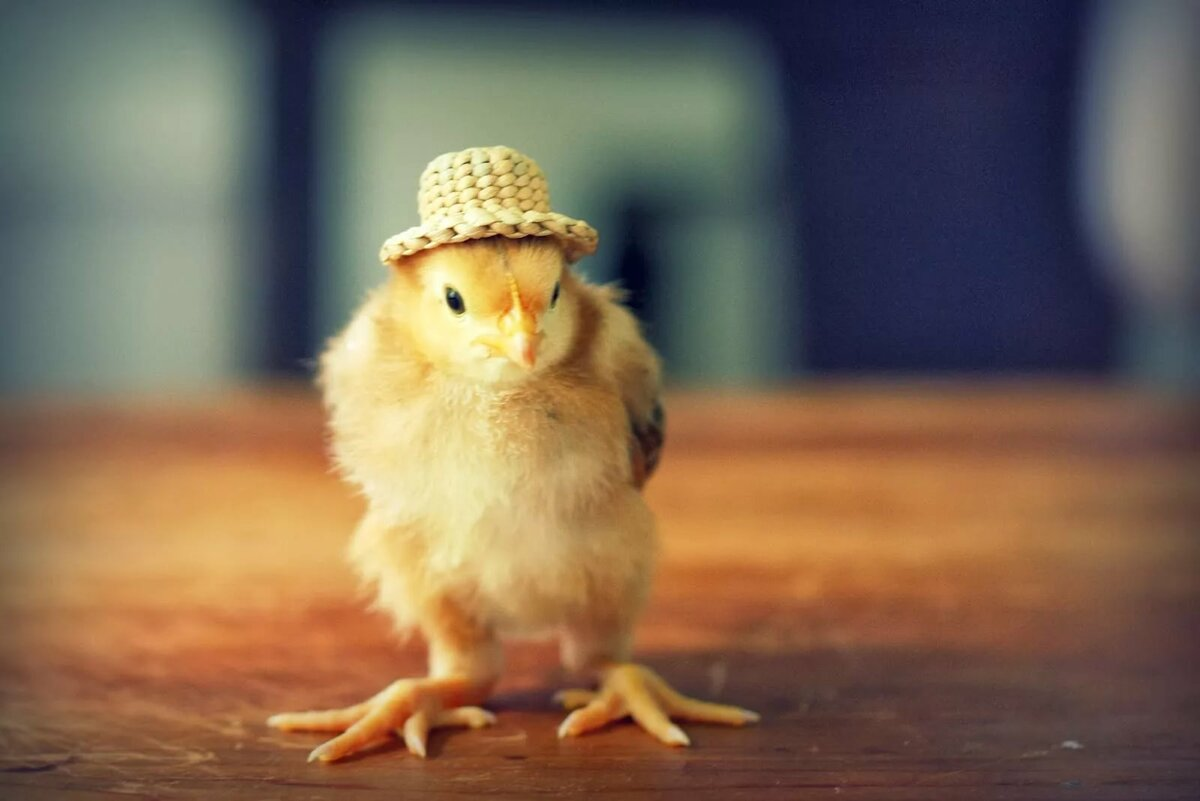 Cute chick #3