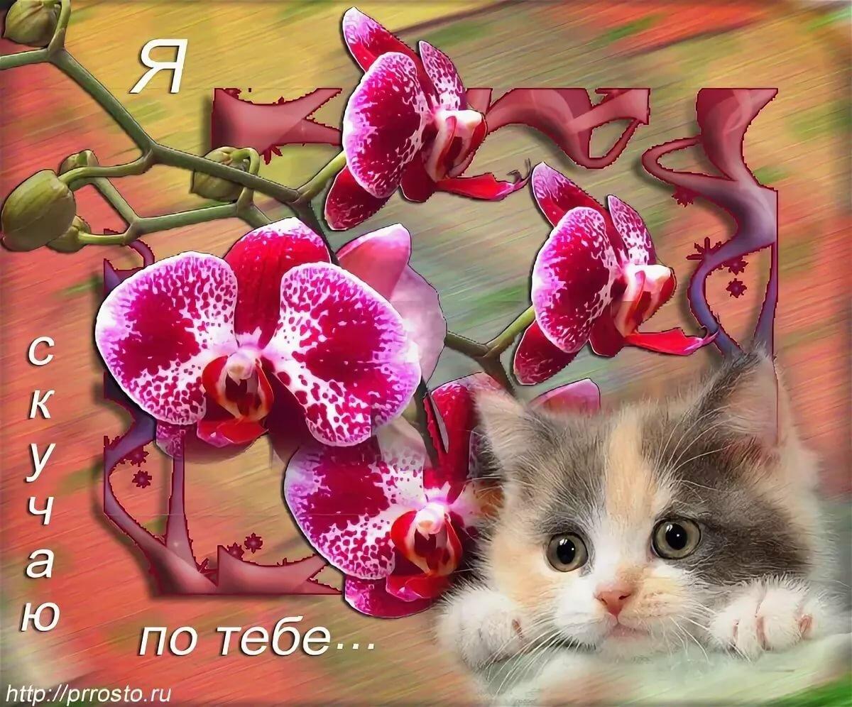 Аватарку для, открытка скучаю по тебе подруга