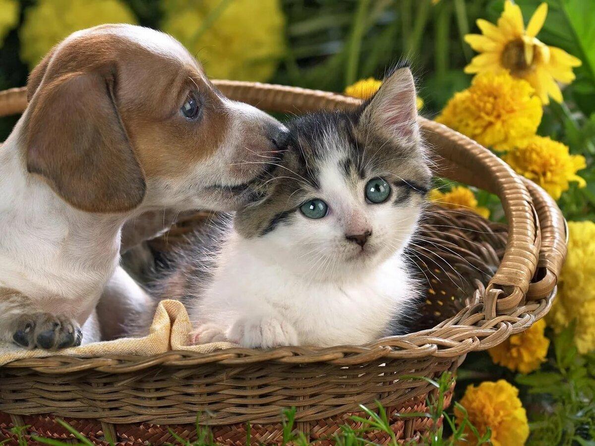 Милые картинки с котами и собаками
