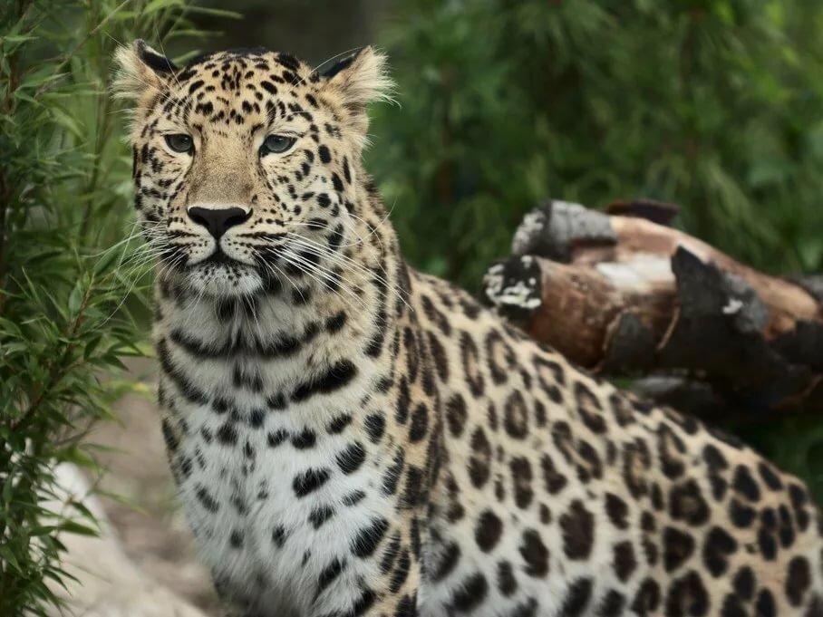 редкие животные амурской области фото мобильная фотография