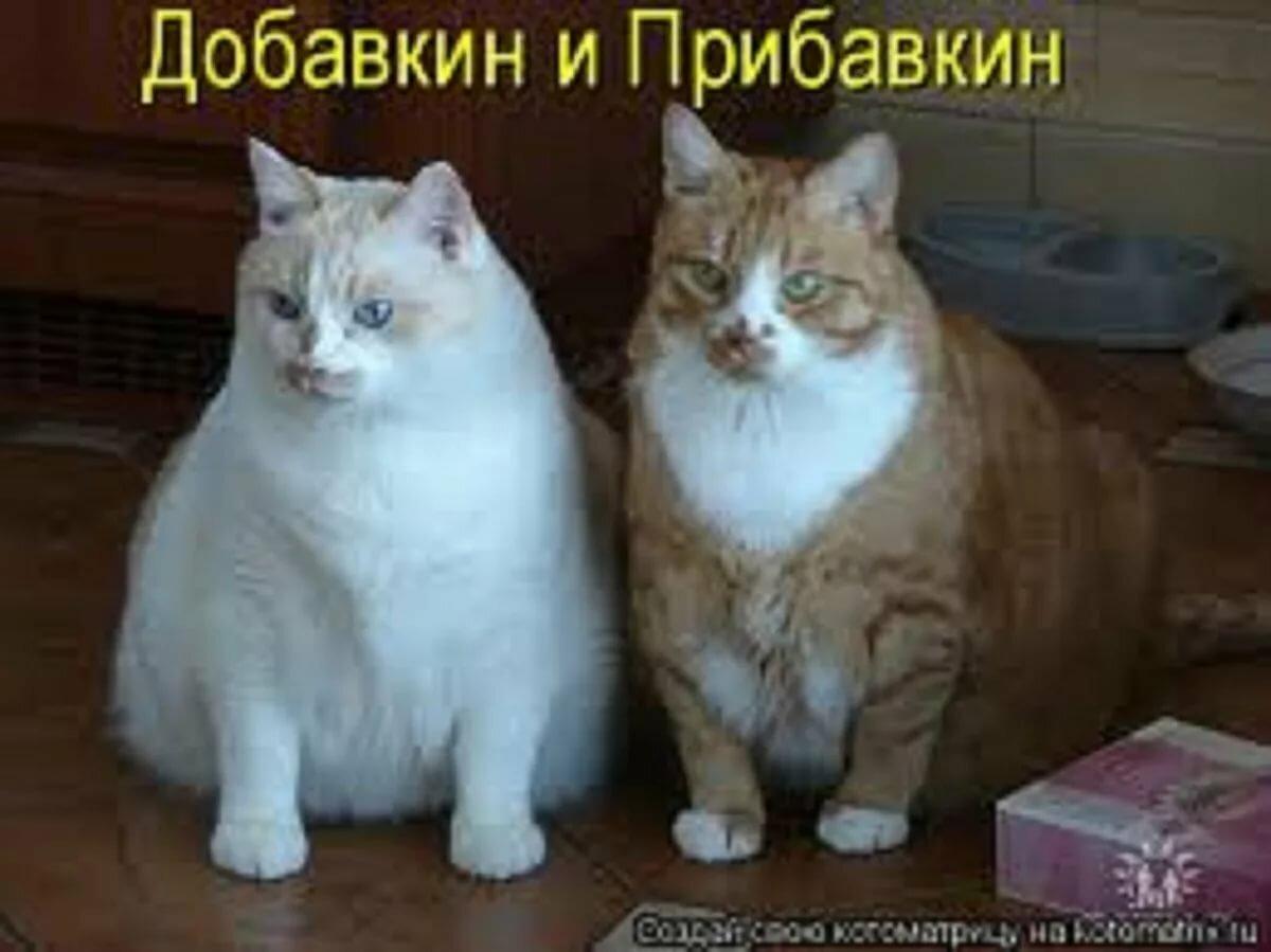 Картинки смешные про котов и собак с надписями смешные до слез, смешными