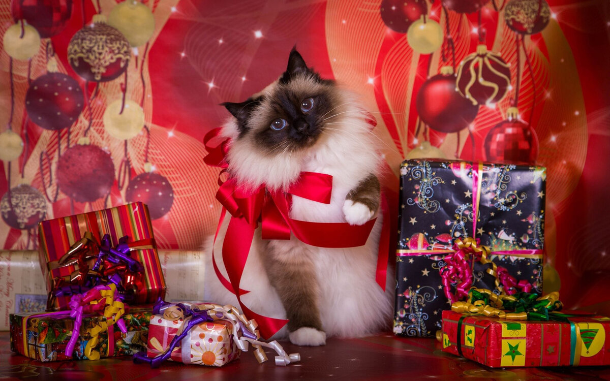 такой молниеносной новогодние картинки с кошками светланой впервые
