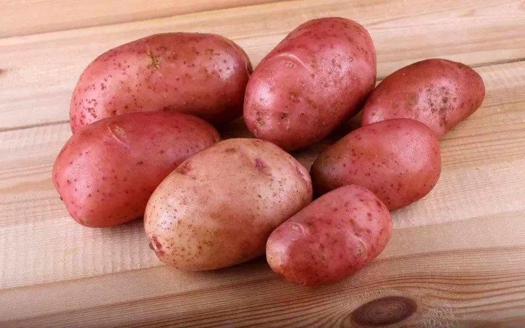 один картофель белла роса описание сорта фото отзывы удобства