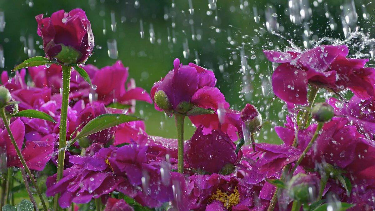 Живые картинки которые двигаются природа весной