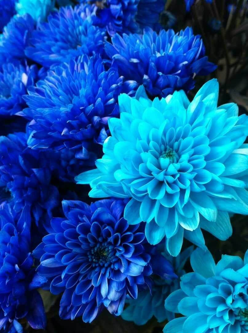 Картинки оттенки синего
