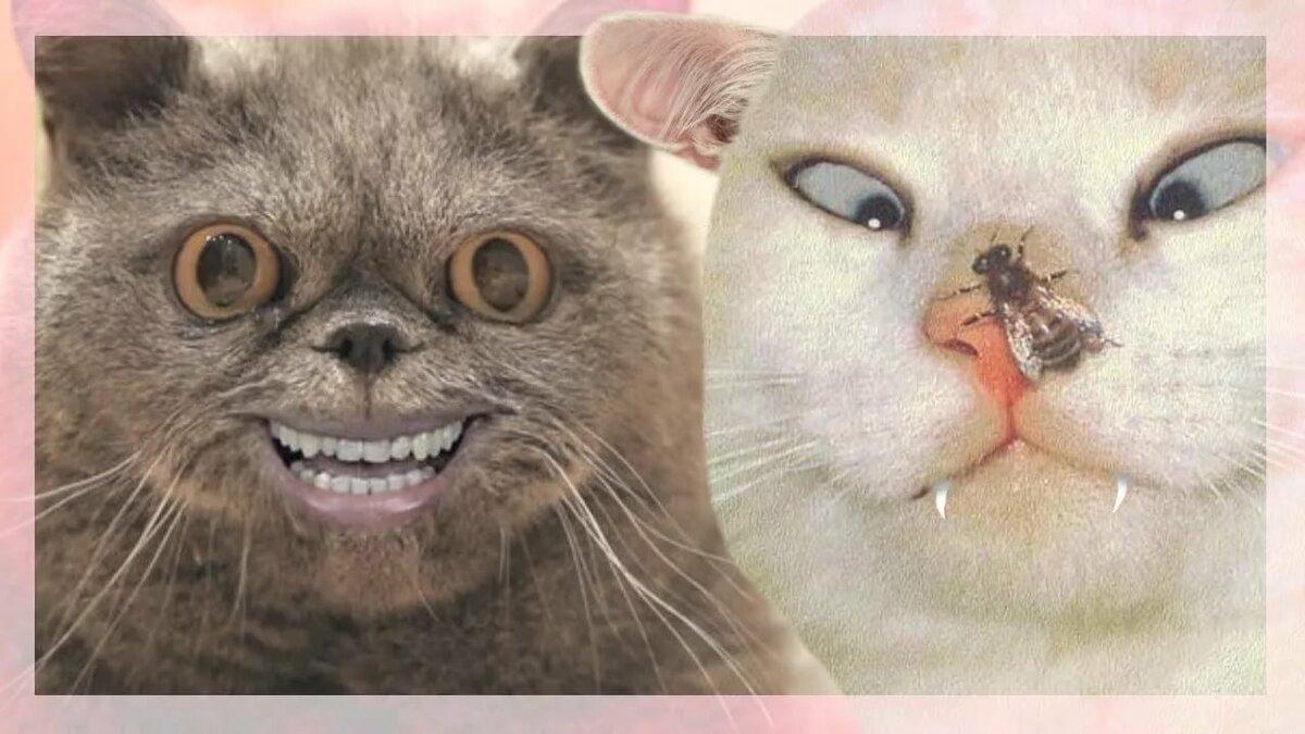 Смешные картинки котят очень смешные до слез