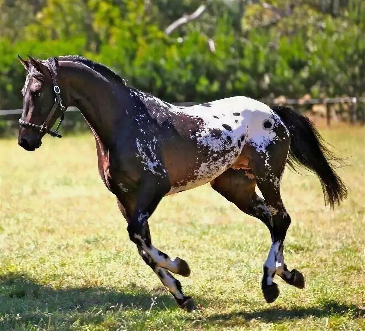 картинки про лошадей редких пород своих детей