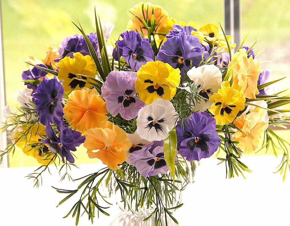 цветы букеты анютины глазки