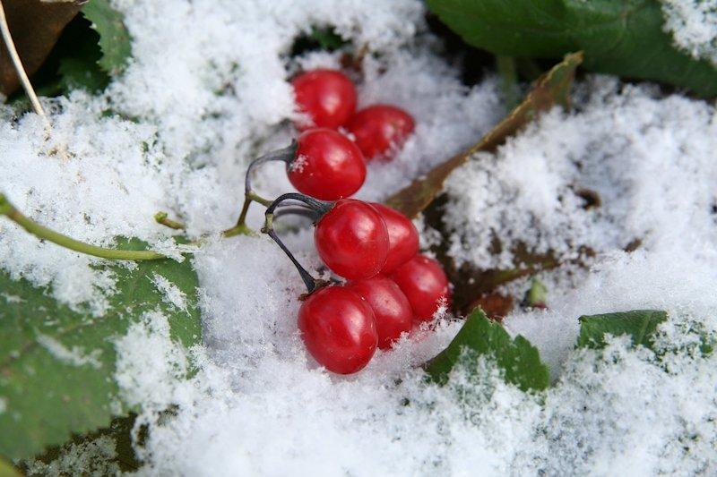 всем рисунок из ягод на снегу фото одной последних