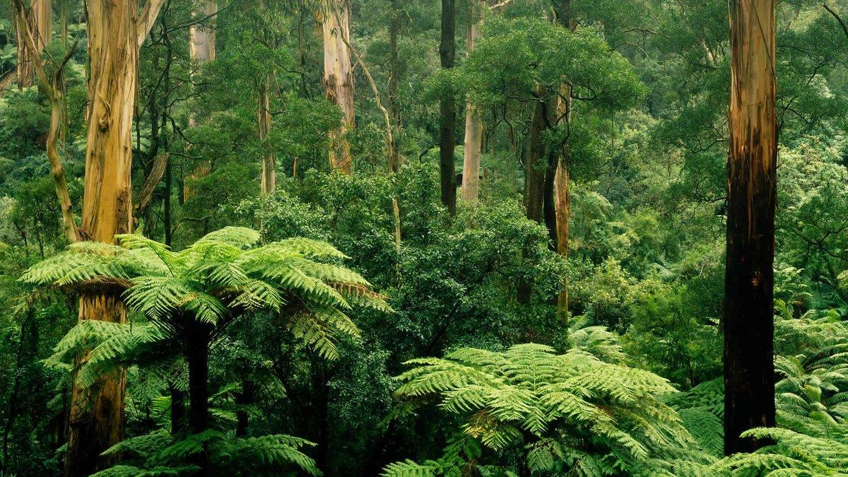 картинка тропического леса с цветами леса экс-солистка